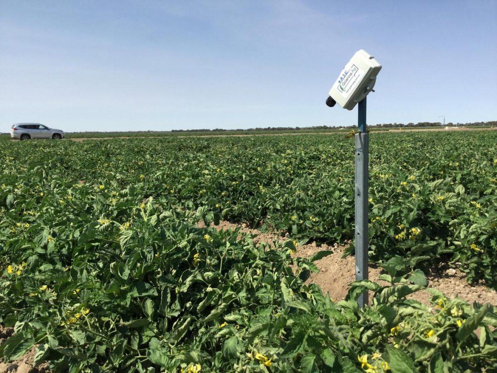 goanna-ag-canopy-sensor-in-csiro-tomato-trials-near-swan-hill-vic-image-supplied-by-goanna-ag.jpg